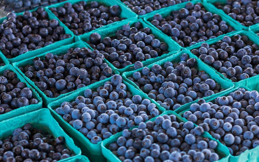 Russell's Blueberry Farm & Book Barn